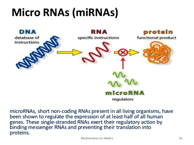 rna-structure-types-and-functions-32-638